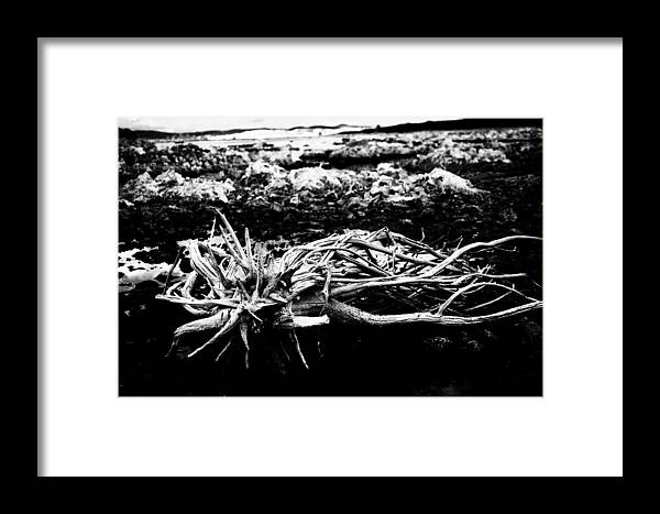 Nature Framed Print featuring the photograph Contrast by Jessica Roth