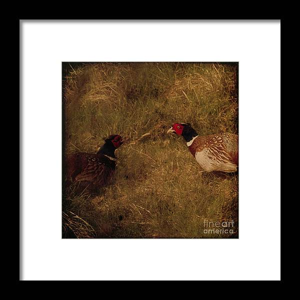 Pheasant Framed Print featuring the photograph Conversations by Angel Ciesniarska
