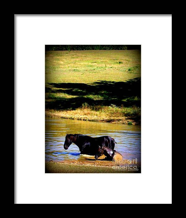 Horses Framed Print featuring the photograph Cooling Off by Rabiah Seminole
