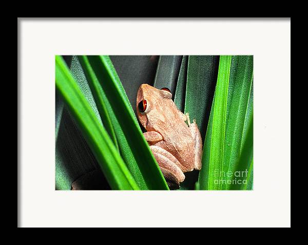 Coqui Framed Print featuring the photograph Coqui In Bromeliad by Thomas R Fletcher
