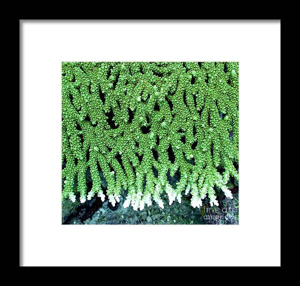 Coral Framed Print featuring the photograph Coral by Dragica Micki Fortuna