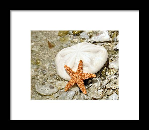 Sea Shells Framed Print featuring the photograph Core Of The Reef by Maria Nesbit
