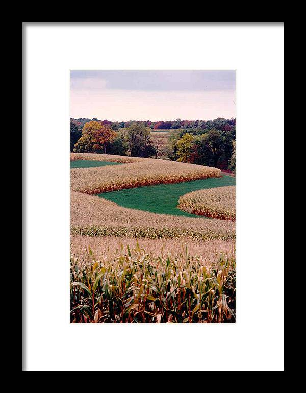 Photograph Framed Print featuring the photograph Corn Field by William Burgess