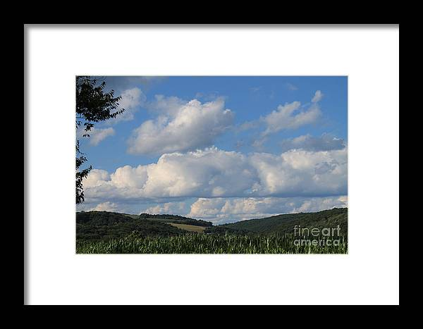 Field Framed Print featuring the photograph Cornfield With A View by Carrie Blue