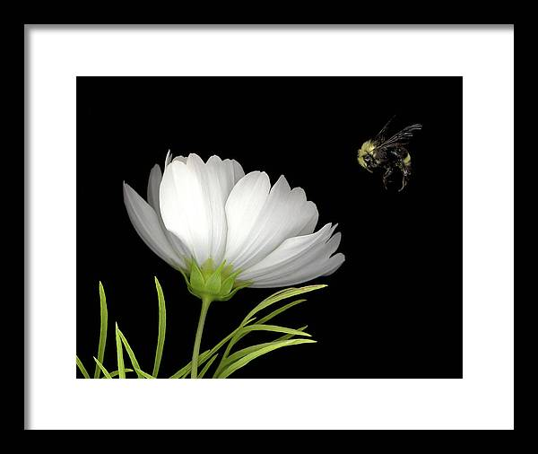 Cosmo Framed Print featuring the mixed media Cosmo And Bee by Sandi F Hutchins
