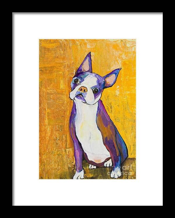 Boston Terrier Animals Acrylic Dog Portraits Pet Portraits Animal Portraits Pat Saunders-white Framed Print featuring the painting Cosmo by Pat Saunders-White
