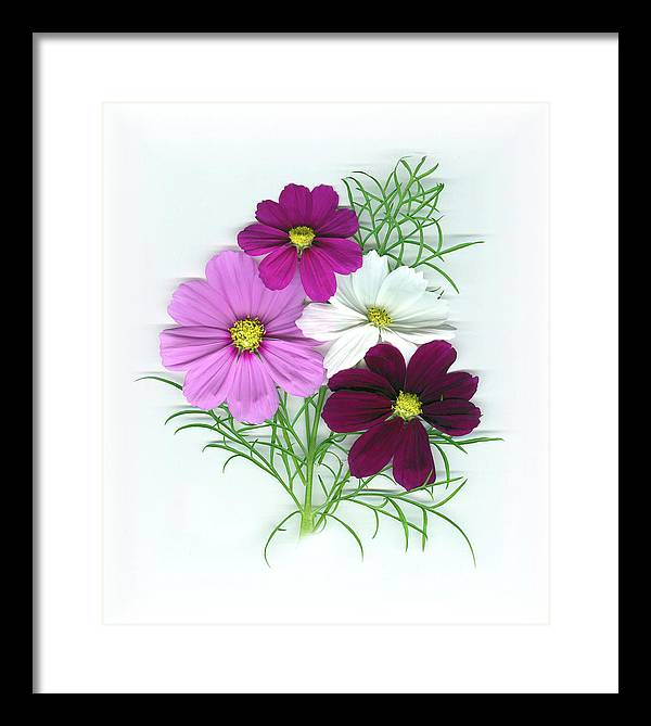 Cosmos Framed Print featuring the mixed media Cosmos Bouquet by Sandi F Hutchins