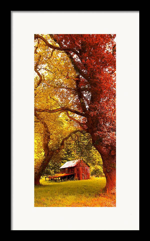 Forest Framed Print featuring the photograph Cosy Shed by Svetlana Sewell