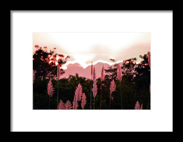 Cypress Framed Print featuring the photograph Cotton Candy Sunset 4 by Ken Figurski