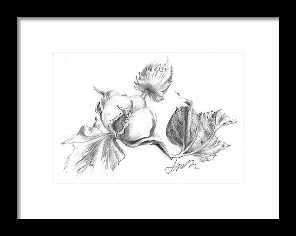 Graphite Pencil Drawing Framed Print featuring the drawing Cotton Harvest by Jacki Kellum
