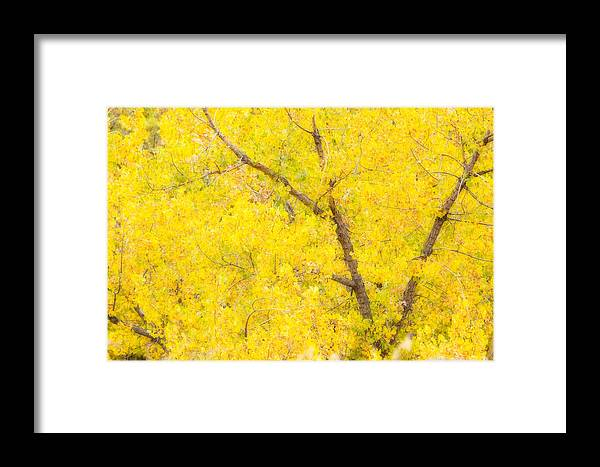 Trees Framed Print featuring the photograph Cottonwood Colors by James BO Insogna