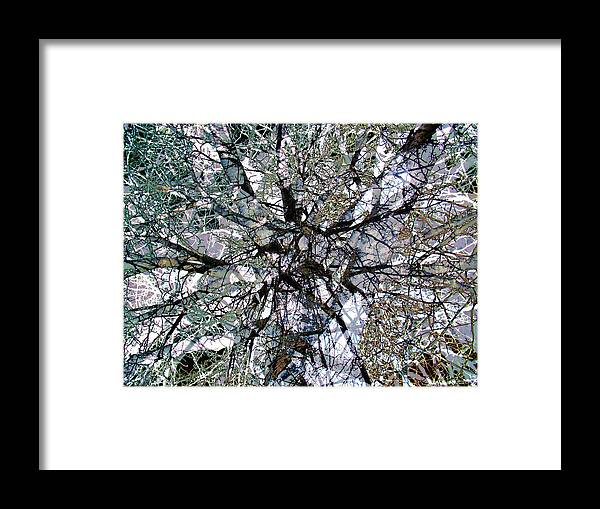 Cottonwood Framed Print featuring the photograph Cottonwood Montage by Ron Bissett