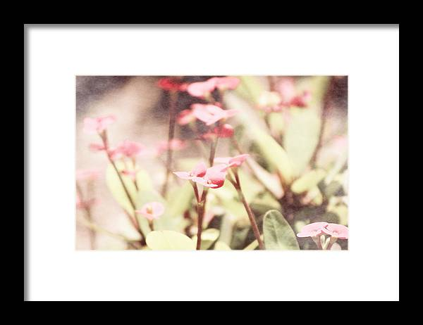 Prism Pink Framed Print featuring the photograph Country Memories in Prism Pink by Colleen Cornelius