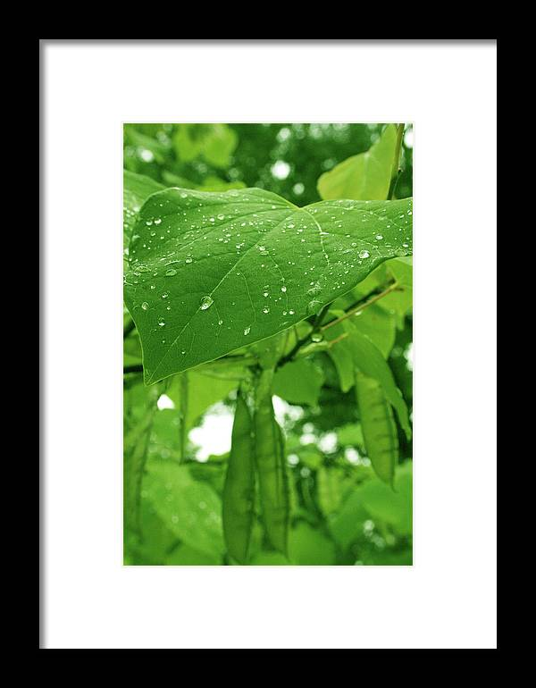 Bright Green Framed Print featuring the photograph Covered Babies by Euboea Brown