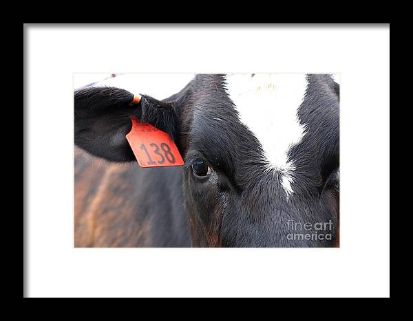 Wingsdomain Framed Print featuring the photograph Cow 138 by Wingsdomain Art and Photography