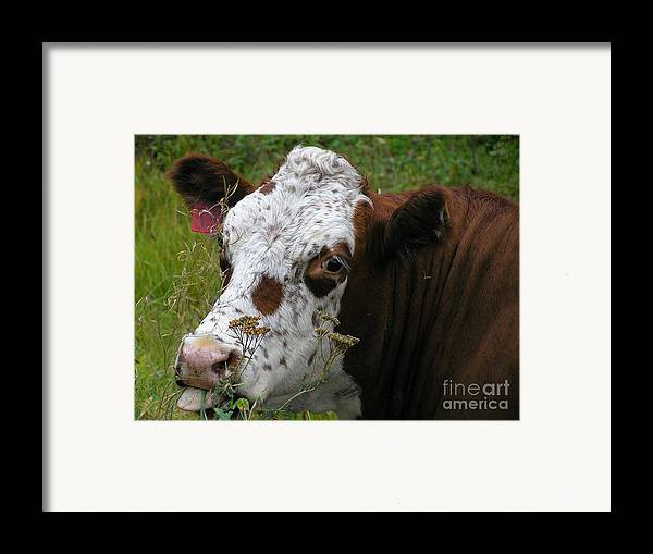 Tongue Framed Print featuring the photograph Cow Tongue by Louise Magno