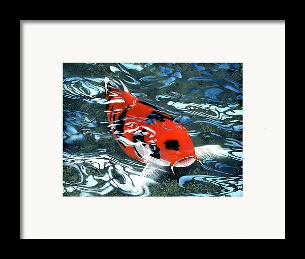 Coy Koi Framed Print featuring the painting Coy Koi by Charles Parks