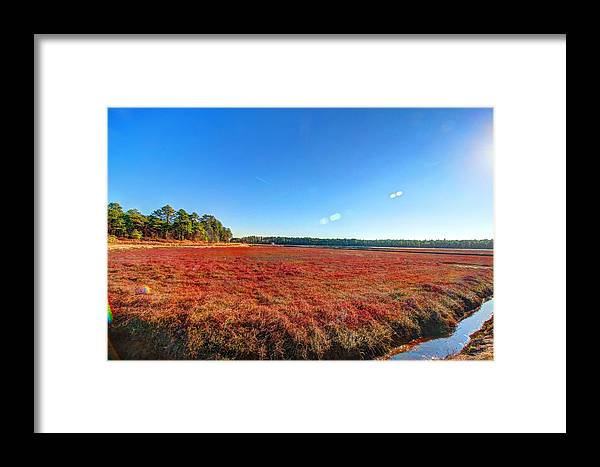 Cranberry Framed Print featuring the photograph Cranberries by Frank Nicolato