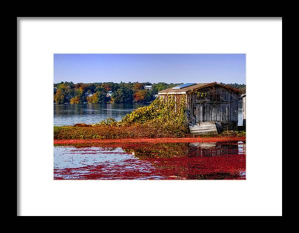 Cape Cod Framed Print featuring the photograph Cranberry Bog Farm II by Gina Cormier