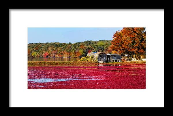 Cape Cod Framed Print featuring the photograph Cranberry Juice by Gina Cormier