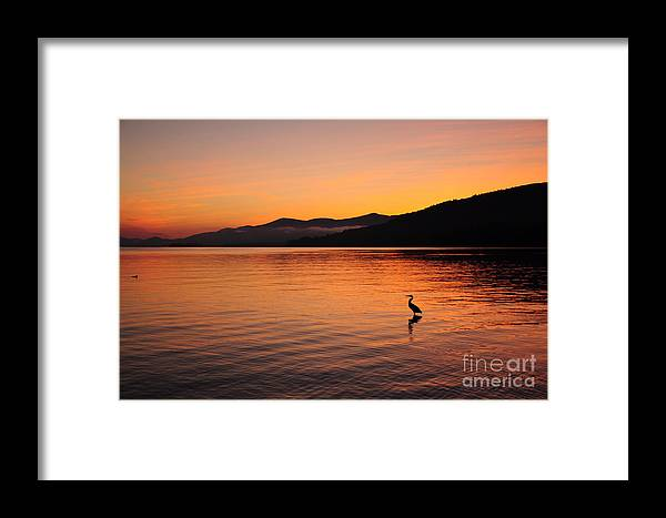 Crane Framed Print featuring the photograph Crane At Sunrise by Jen Brosnan