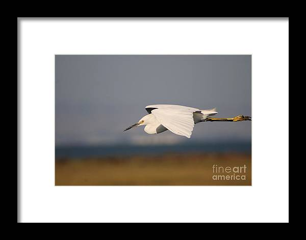 Animal Framed Print featuring the photograph Crane by Catherine Lau
