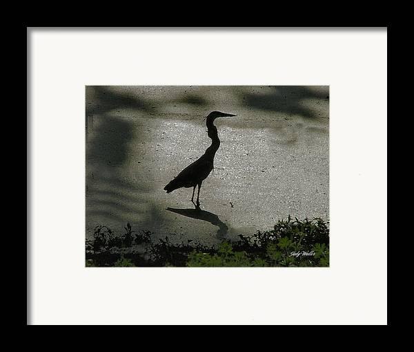 Bird Framed Print featuring the photograph Crane Reflections by Judy Waller