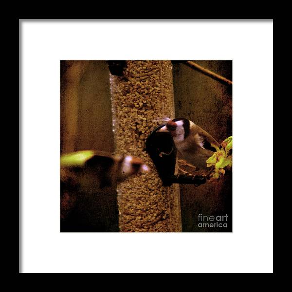 Feeder Framed Print featuring the photograph Crazy Goldfinch by Angel Ciesniarska