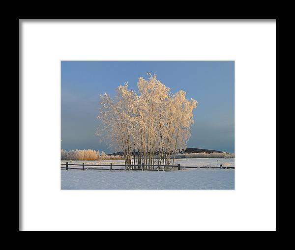 Snow Framed Print featuring the photograph Creamer Field by Louise Magno