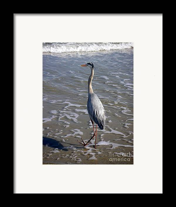 Nature Framed Print featuring the photograph Creatures Of The Gulf - Advancing Slowly by Lucyna A M Green