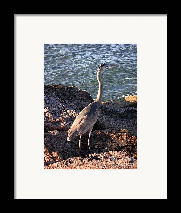 Nature Framed Print featuring the photograph Creatures Of The Gulf - Ever Watchful by Lucyna A M Green