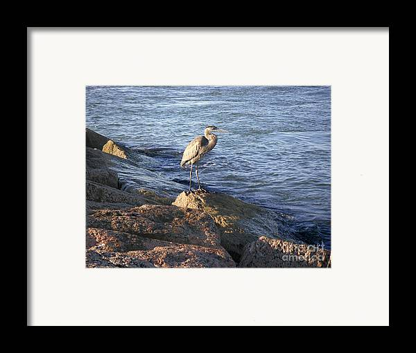 Nature Framed Print featuring the photograph Creatures Of The Gulf - Keeping My Head Down by Lucyna A M Green