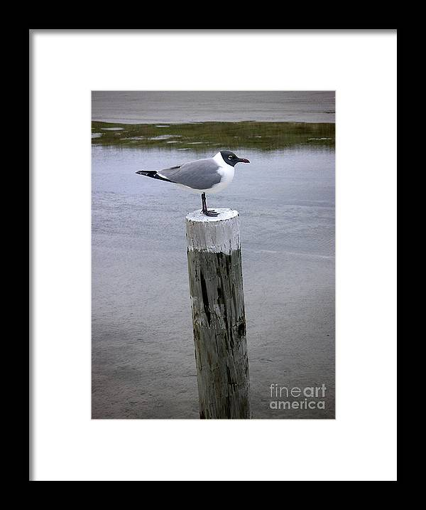 Nature Framed Print featuring the photograph Creatures Of The Gulf - Keeping Watch by Lucyna A M Green