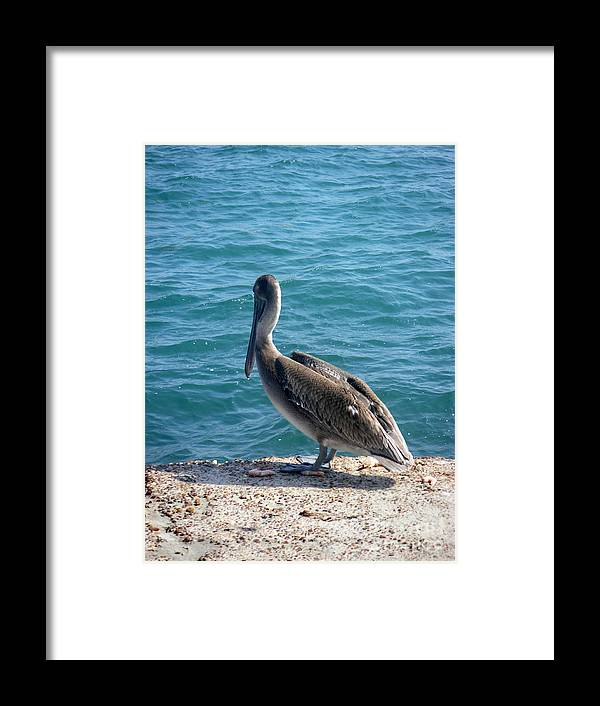 Nature Framed Print featuring the photograph Creatures Of The Gulf - Lulled By The Waves by Lucyna A M Green