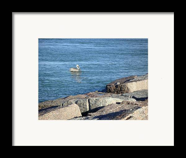 Nature Framed Print featuring the photograph Creatures Of The Gulf - Pelican Landing by Lucyna A M Green