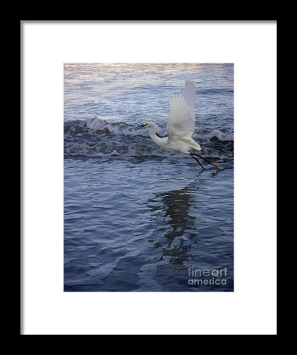 Nature Framed Print featuring the photograph Creatures Of The Gulf - Take Off At Dusk by Lucyna A M Green