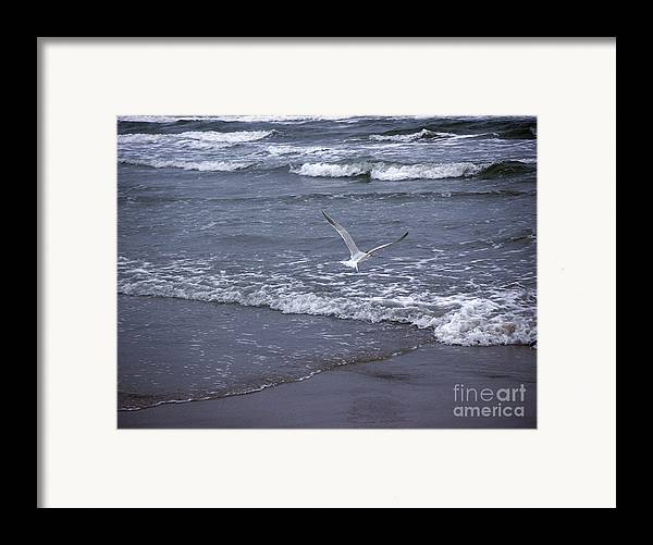 Nature Framed Print featuring the photograph Creatures Of The Gulf - Tranquility by Lucyna A M Green