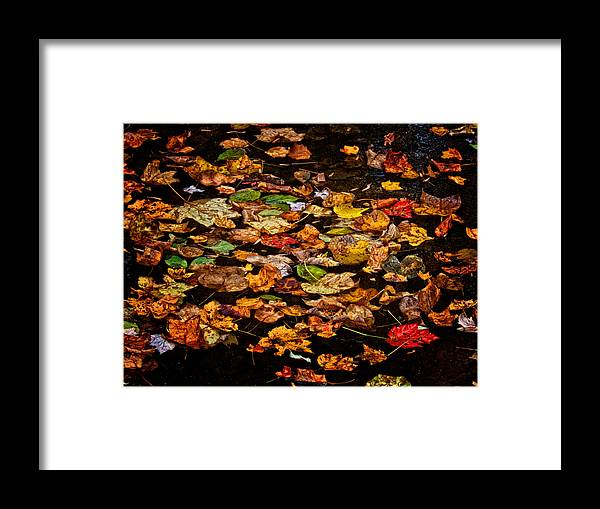Framed Print featuring the photograph Creek Leaves by Kathi Isserman