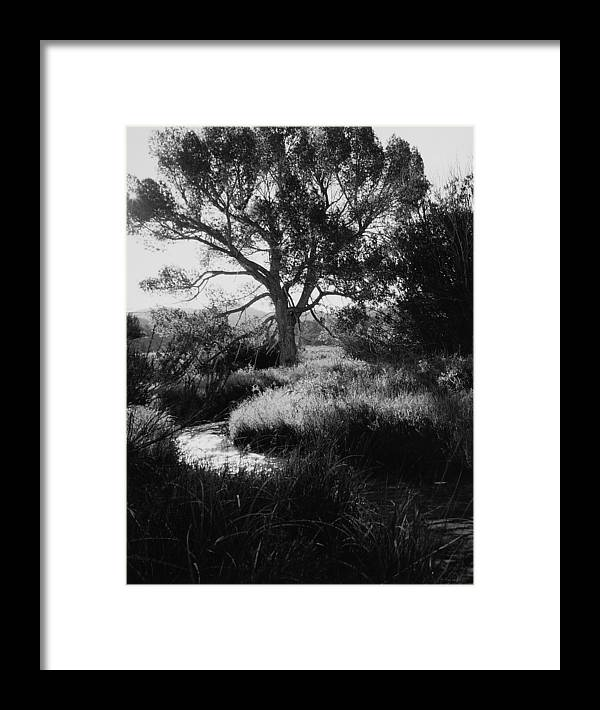 Landscape Framed Print featuring the photograph Creekside Summer by Allan McConnell