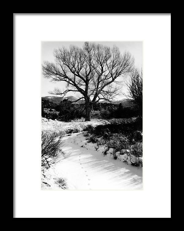 Landscape Framed Print featuring the photograph Creekside Winter by Allan McConnell