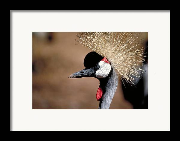Bird Framed Print featuring the photograph The I Can't Believe It Bird by Carl Purcell