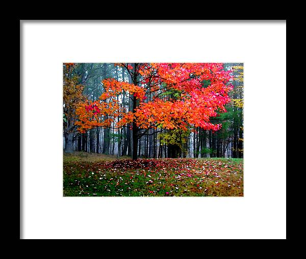 Autumn Framed Print featuring the painting Crimson Tree by Paul Sachtleben