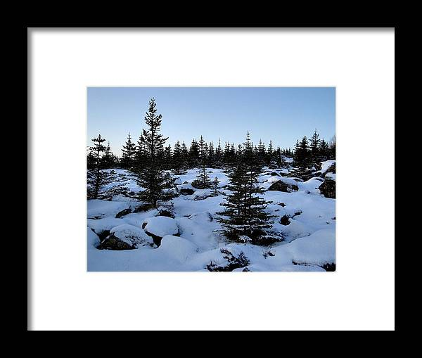 Evergreens And Snow Framed Print featuring the photograph Crisp Clear Morning by Marilynne Bull