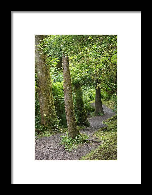 Path Framed Print featuring the photograph Crooked Little Path by Angi Parks