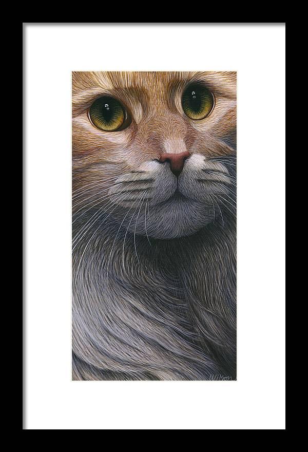 Cropped Cat 4 Framed Print By Carol Wilson