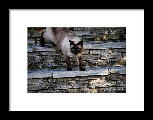 Cat Framed Print featuring the photograph Cross Eyed by Joy Bradley
