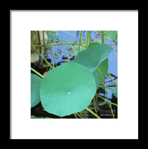 Framed Print featuring the photograph Crossing The Lily Pond Outback Nubmer Two Square by Heather Kirk