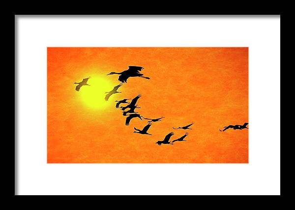 Nature Framed Print featuring the photograph Crossing the Sun, Sandhill Cranes by Zayne Diamond Photographic