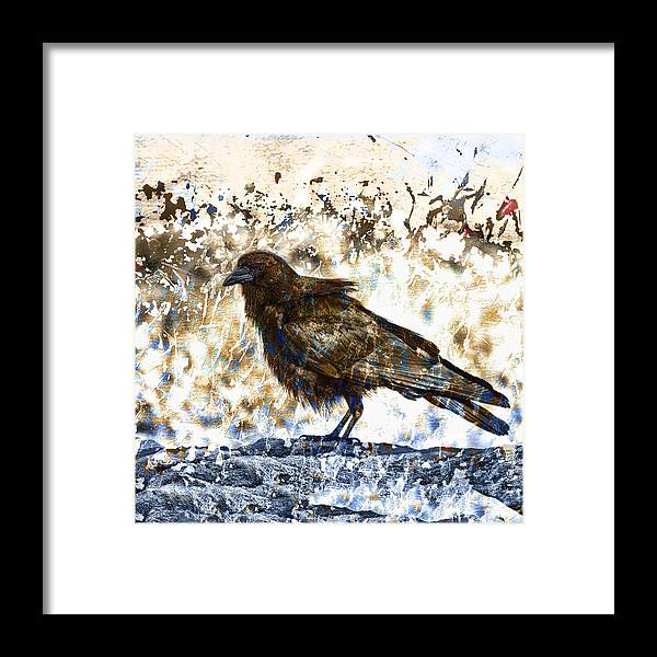 Crow Framed Print featuring the photograph Crow On Blue Rocks by Carol Leigh