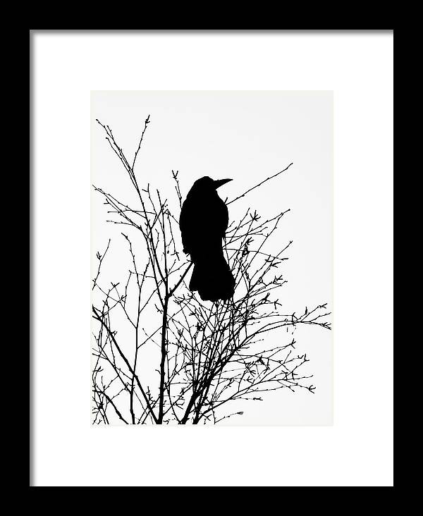 Crow Framed Print featuring the photograph Crow Rook Perched In A Tree With Pare Branches In Winter by Philip Openshaw